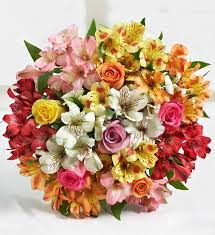 colorful roses colorful roses peruvian lilies florists florists