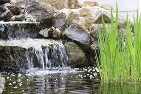 Aquascape Ponds Coulter Gardens Amarillo Tx Ponds