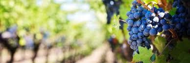 Solvang Inn And Cottages Reviews by Santa Ynez Winerds Wine Valley Inn Solvang Ca