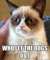 Who Let The Dogs Out Meme - grumpy cat who let the dogs out dump a day