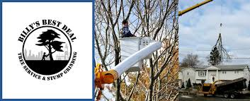 billy s best deal tree service offers tree services in wolfeboro nh