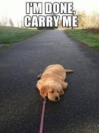 I M So Tired Meme - best 20 i m so tired meme wallpaper site wallpaper site