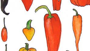 Chili Pepper Home Decor Chili Pepper Kitchen Decor Ideas Chili Pepper Wall