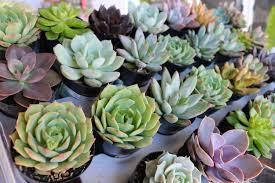 pots for succulents for sale 2 5
