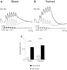 spinal cats on the treadmill changes in load pathways journal