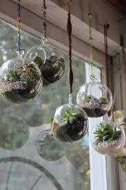 best 25 hanging glass terrarium ideas on pinterest hanging