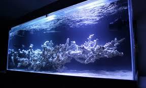 Dramatic Aquascapes Rss Mr Kang U0027s Korean Reef Aquarium Is A Field Of Exquisite