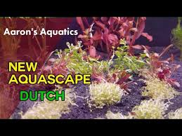 Aquascape Nj 8 Week Old New Aquascape Aquatic Videos