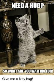Cat Hug Meme - 25 best memes about kitty hug kitty hug memes