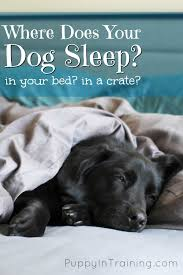 put dog to sleep reason you may to put your dog the of america