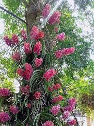 vanda orchids wow i orchids vanda orchid shade plants