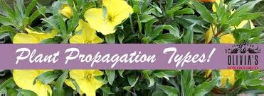 types of plant propagation sexual and asexual