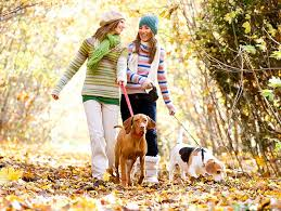 Are Backyard Mushrooms Poisonous Mushrooms Poisonous To Pets Petfinder