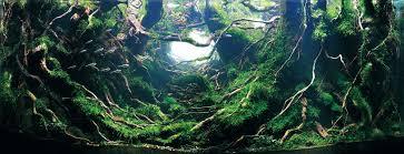 Nature Aquascape The Surreal Submarine World Of Aquascaping Amuse