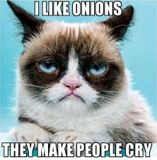 No Grumpy Cat Meme - funny angry grumpy cat memes collection for friends family