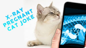 x ray pregnant cat joke android apps on google play