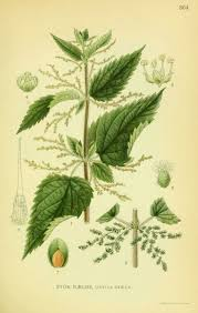 native american medicinal plants 19 best fairy trees images on pinterest magick flower fairies