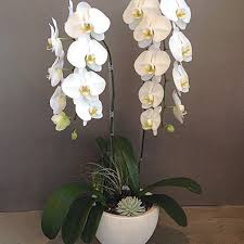 orchid delivery los angeles florist flower delivery by the orchid wrangler