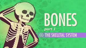 the skeletal system crash course a u0026p 19 youtube