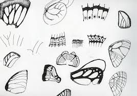 digital drawing sketches of butterfly wing pattern