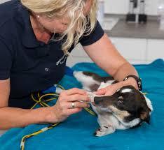 Tierarzt Bad Wildungen Kleintierpraxis Dr Hartmut Burkhardt 92237 Sulzbach Rosenberg