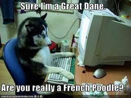 Great Dane Meme - sure i m a great dane are you really a french poodle i can has