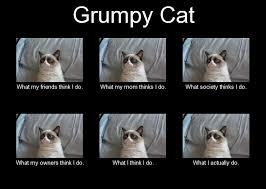 Best Grumpy Cat Memes - top 25 grumpy cat memes cattime