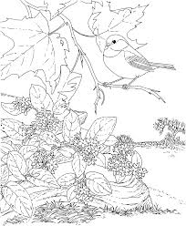 free printable coloring page massachusetts state bird and flower