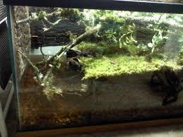 salamander cages new salamander vivarium project 0127121344 jpg