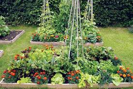 Companion Planting Garden Layout Intensive Gardening Grow More Food In Less Space With The Least