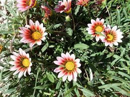plante vivace soleil images gratuites de plein air fleur bouquet campagne tige