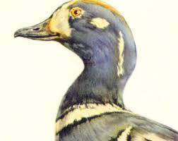 harlequin duck etsy