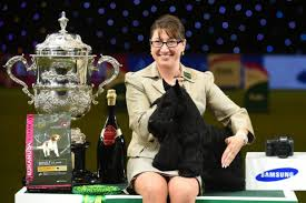 boxer dog crufts 2015 when is crufts 2017 dates full schedule how to get tickets and