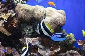 saltwater aquarium guide setting up a saltwater aquarium