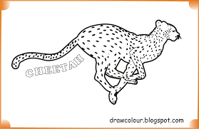 cheetah drawings with color