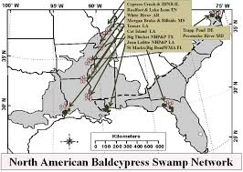 Map Of The North America by Middleton Map Of The North American Bald Cypress Swamp Network