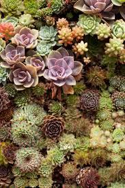 551 best succulent garden images on pinterest succulents garden