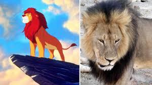 video watch u0027lion king u0027 animator draws touching memorial