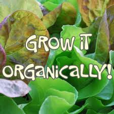 organic gardening explained how to grow it organically