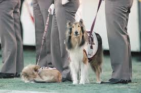 how a stray dog became reveille the first lady of aggieland