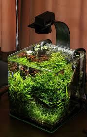 Aquarium Decoration Ideas Freshwater 15 Best Five Gallon Tank Ideas Images On Pinterest Aquarium