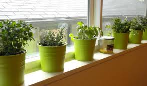 Indoor Container Gardening - container gardening vegetables interesting ideas for home