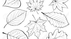 how to draw leaves draw a leaf mellos clipart best clipart best