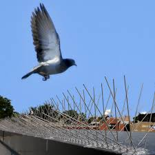 How To Get Rid Of Pigeons Off My Roof by Bird X Original Bird X Stainless Steel Bird Spikes 50 Ft Pigeons
