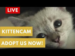 Goodnight Meme Cute - kitten cam day goodnight kitties powered by cute avalanche