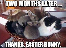Chocolate Bunny Meme - chocolate easter bunny meme best chocolate 2017