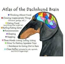 Weiner Dog Meme - dachshund memes home facebook