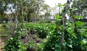 how to grow green beans even with a brown thumb treehugger