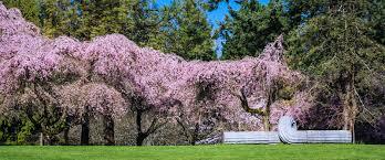 Botanical Gardens Seattle Seattle Day Trip To The Vandusen Botanical Garden In Vancouver