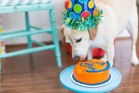 dog birthday party how to throw a birthday party for your dog popsugar pets